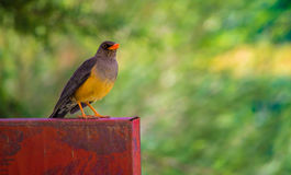 kolorowe ptaka Obrazy Stock