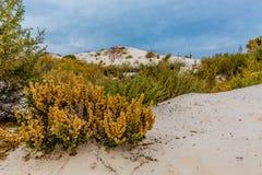 Kolorowe Pustynne rośliny w Zadziwiających Surrealistycznych Białych piaskach Nowy - Mexico Zdjęcie Stock