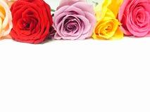 kolorowe róże fotografia royalty free