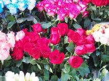 kolorowe róże Zdjęcie Stock
