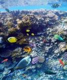 Kolorowe raf koralowa ryba morze Obraz Stock