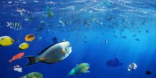 Kolorowe raf koralowa ryba morze Zdjęcia Stock