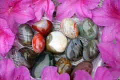Kolorowe skały i następy otaczający purpurami kwitną płatki Zdjęcia Royalty Free