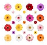 Kolorowe stokrotki Odizolowywać na Białym tle Fotografia Stock