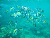 kolorowe tropikalne ryby Obraz Royalty Free