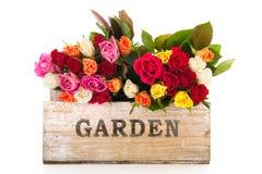 Kolorowego bukieta mieszane róże od ogródu Obraz Royalty Free