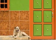 kolorowego psa odpoczynkowa ściana Obraz Royalty Free