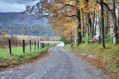 kolorowego spadek drogowi drzewa niebrukowani Zdjęcie Stock
