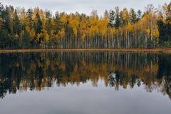 Kolorowej jesieni nadjeziorny treeline z odbiciem Fotografia Stock