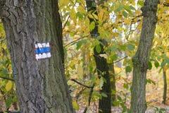 Kolorowej jesieni turystyczna błękitna ocena Obraz Stock