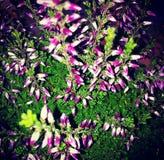 kolorowi bukietów kwiaty obraz stock