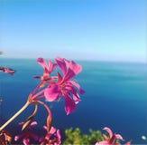 kolorowi bukietów kwiaty zdjęcia royalty free
