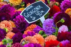 Kolorowi bukiety dalie kwitną przy rynkiem w Kopenhaga, Dani Obrazy Stock