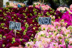 Kolorowi bukiety dalie kwitną przy rynkiem w Kopenhaga, Dani Zdjęcia Stock