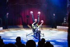 kolorowi cyrkowi występy dla dzieci i dorosłych Fotografia Royalty Free