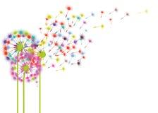 Kolorowi dandelions w wiatrze ilustracji