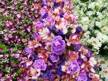Kolorowi dekoracyjni kwiaty Zdjęcia Royalty Free