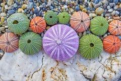 Kolorowi denni czesacy na biel skale i otoczaki wyrzucać na brzeg Fotografia Stock