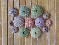 Kolorowi denni czesacy na drewnianym tle Fotografia Royalty Free