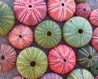 Kolorowi denni czesacy na mokrym piasku Obraz Stock