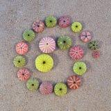 Kolorowi denni czesacy na plaży Zdjęcie Royalty Free