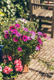 Kolorowi doniczkowi lato kwiaty obrazy royalty free