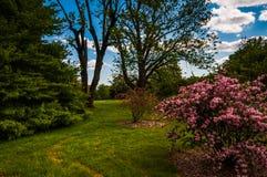 Kolorowi drzewa i krzaki przy Cylburn arboretum, Baltimore Obraz Royalty Free