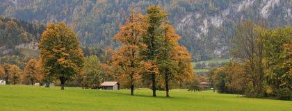 Kolorowi drzewa i zielona łąka obrazy royalty free