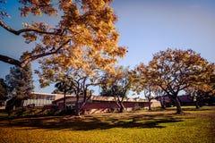 Kolorowi drzewa jesień Zdjęcia Stock