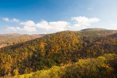 Kolorowi drzewa w spadku lesie Fotografia Royalty Free