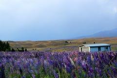 Kolorowi dzicy kwiaty Zdjęcia Royalty Free