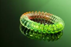 kolorowi elastyczni włosy spirali krawaty Zdjęcia Royalty Free