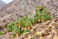 Kolorowi fan drzewka palmowe w Joshua drzewie zdjęcia stock