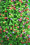Kolorowi Fishtail palmy ziarna Zdjęcie Stock