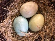 Kolorowi jajka w gniazdeczku Zdjęcie Royalty Free