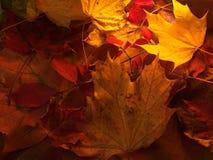 kolorowi jesień liść Fotografia Stock