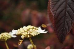 kolorowi jesień liść Obraz Royalty Free