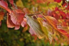 kolorowi jesień liść Zdjęcia Royalty Free