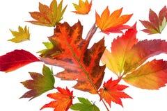 Kolorowi jesień liście Zdjęcia Stock
