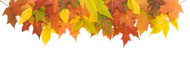 Kolorowi jesień liście. Obraz Royalty Free