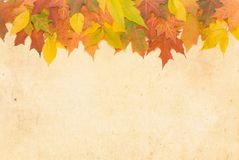 Kolorowi jesień liście. Zdjęcia Royalty Free