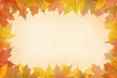 Kolorowi jesień liście. Zdjęcie Royalty Free