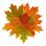 Kolorowi jesień liście. Obraz Stock