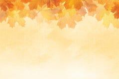 Kolorowi jesień liście. Obrazy Stock