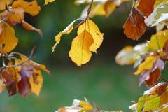 Kolorowi jesień liście na gałązce Zdjęcie Royalty Free