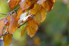 Kolorowi jesień liście na gałązce Zdjęcia Royalty Free