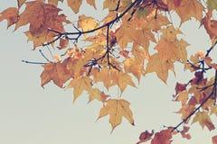 Kolorowi jesień liście w chłodno świetle Zdjęcia Stock