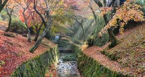 Kolorowi jesień liście wzdłuż kanału z słońce promieniami obrazy stock