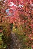 kolorowi jesień drzewa Fotografia Stock