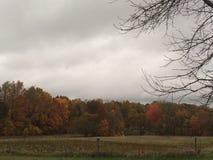 Kolorowi jesieni drzewa na Chmurnym dniu Zdjęcie Royalty Free